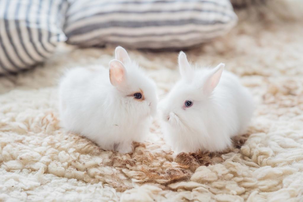 محصولات کرولتی فری دوستدار حیوانات